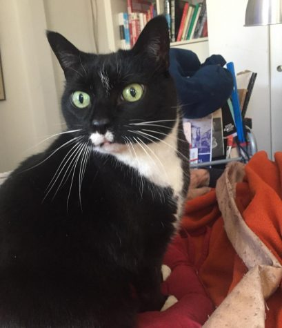 Panini the cat